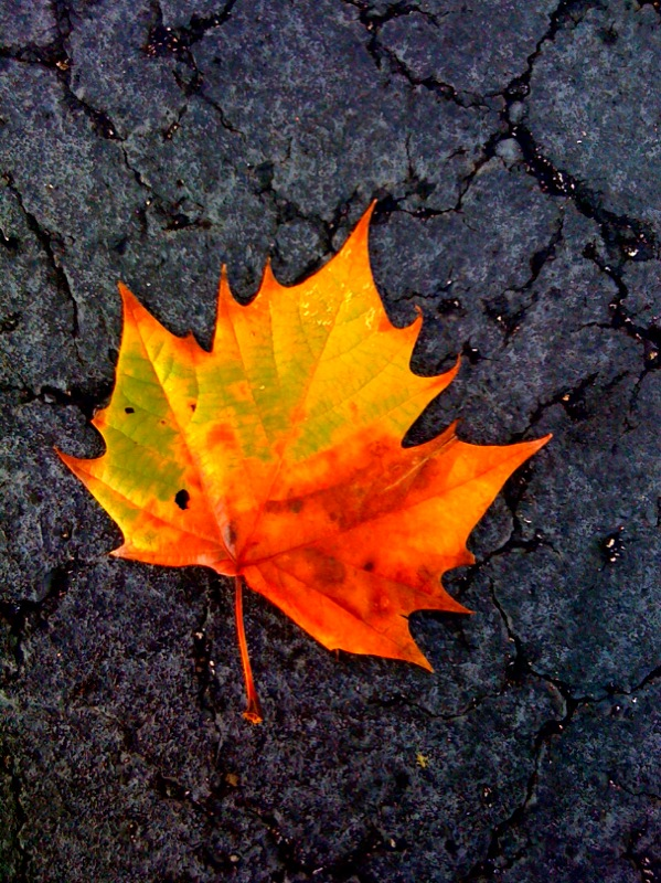 leaf-autumn